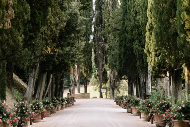 Entrance boulevard of this resort in Tuscany
