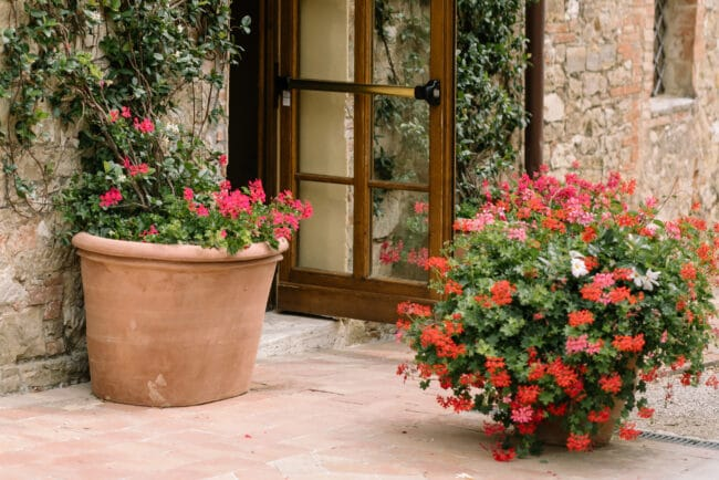 Tuscan style vases with geranium at the entrance