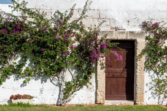 Bouganvillea and typical door