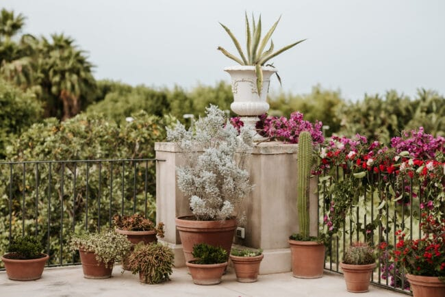 Mediterranean plants for wedding decors in Sicly