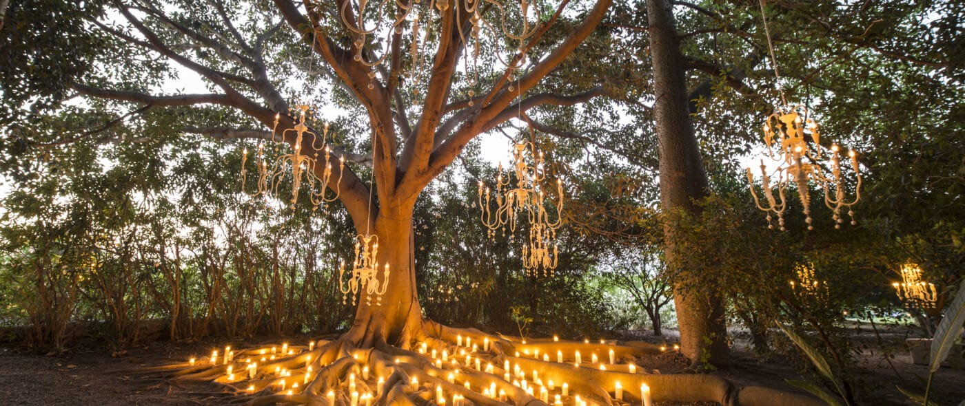 Chandelier and candles on the secular tree of the wedding villa