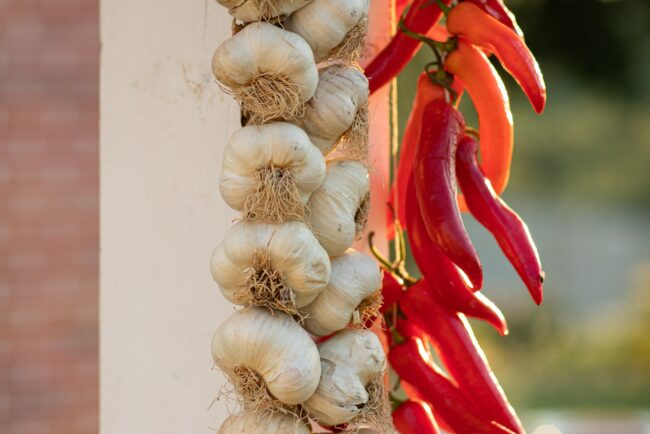 Decors with garlic and red peppers