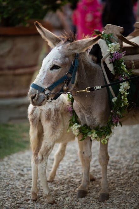 A sweet donkey welcomes the guests