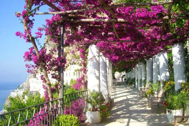 Pergola with bouganville for wedding in Amalfi Coast