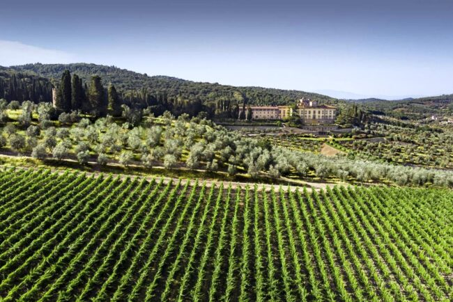 Vineyards view